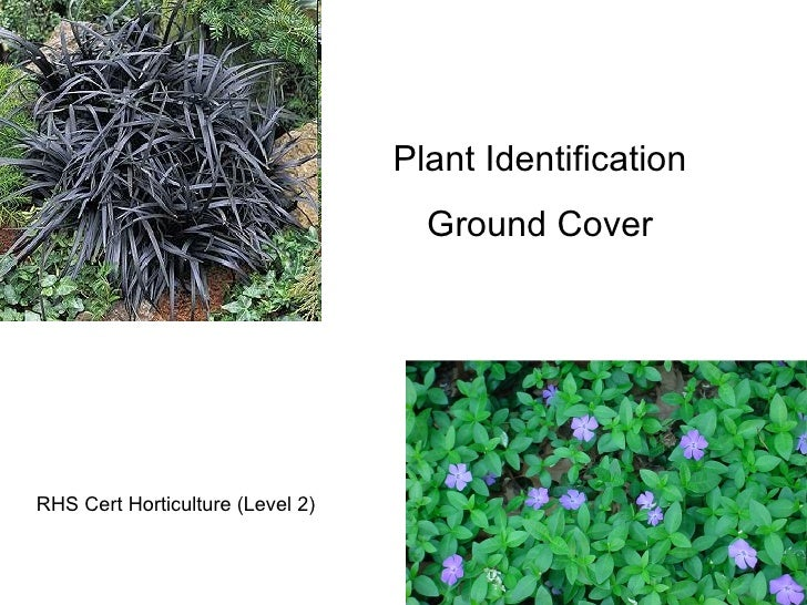 Plant Identification Ground Cover RHS Cert Horticulture (Level 2)