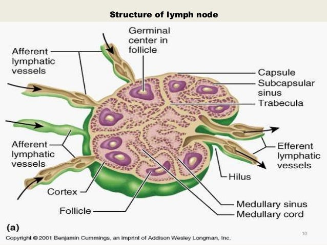 examination of lymph nodes of head and neck, Human Body