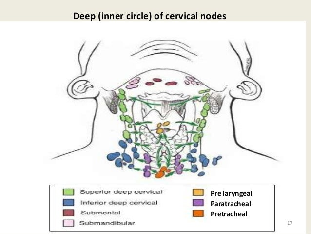 Examination of lymph nodes of head and neck