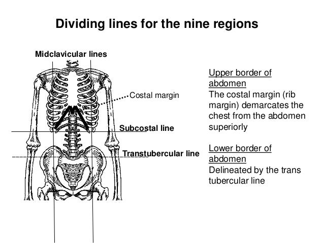 abdominal landmarks