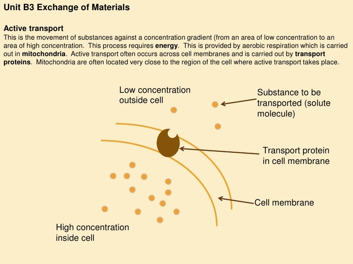 Unit B3 Exchange of Materials  Active transport This is the movement of substances against a concentration gradient (from ...