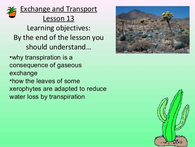 Exchange and Transport          Lesson 13     Learning objectives: By the end of the lesson you     should understand…•why...