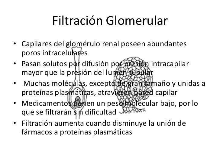 Excreción por Riñones <br />Abarca 3 fenómenos: <br />Filtración glomerular<br />Secreción tubular <br />Reabsorciontubula...