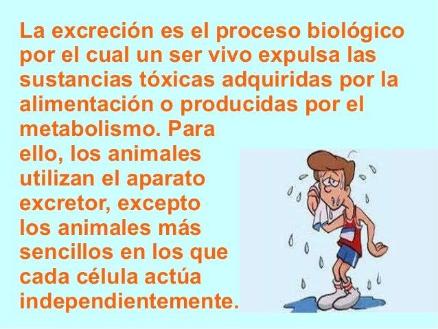 La excreción es el proceso biológico por el cual un ser vivo expulsa las sustancias tóxicas adquiridas por la alimentación...