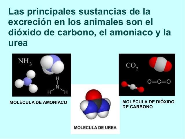 Las principales sustancias de la excreción en los animales son el dióxido de carbono, el amoniaco y la urea MOLÉCULA DE AM...