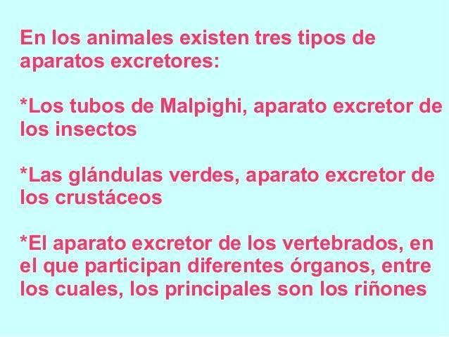 En los animales existen tres tipos de aparatos excretores: *Los tubos de Malpighi, aparato excretor de los insectos *Las g...