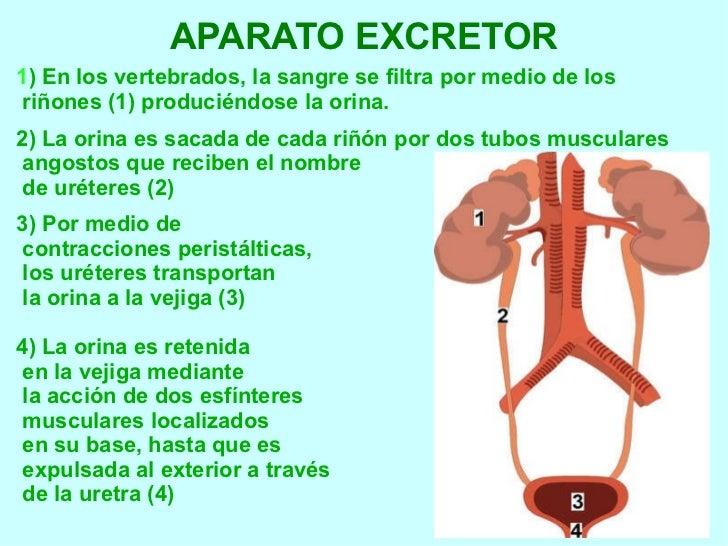 Síntomas Del Infarto De Miocardio En Mujeres  Mejor Con Salud