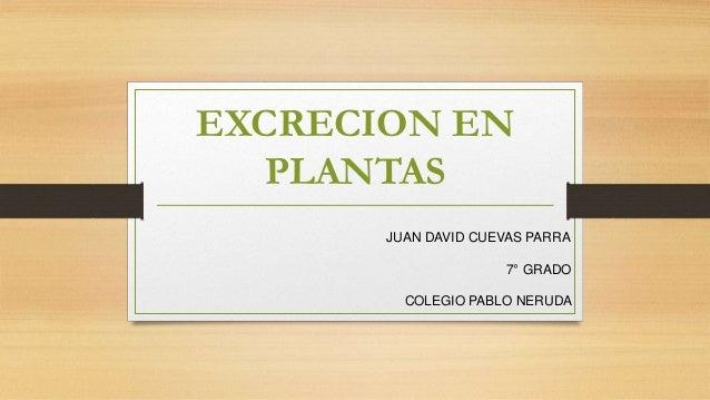 EXCRECION EN PLANTAS JUAN DAVID CUEVAS PARRA 7° GRADO COLEGIO PABLO NERUDA