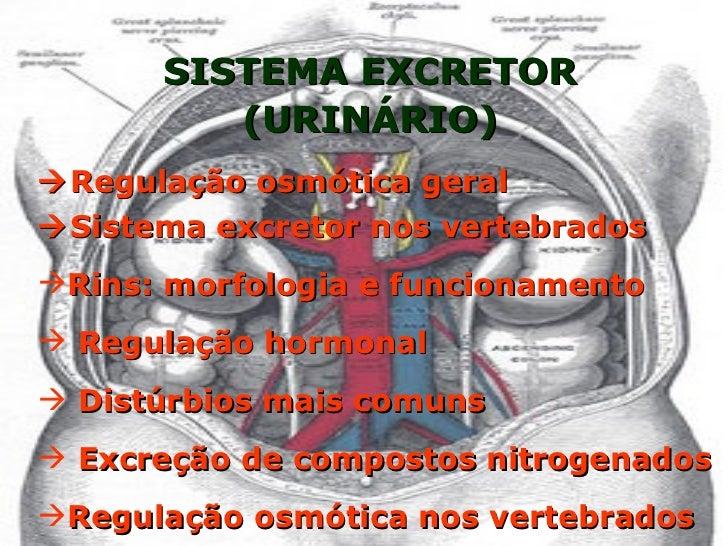 SISTEMA EXCRETOR (URINÁRIO)  Regulação osmótica geral <ul><li> Sistema excretor nos vertebrados </li></ul><ul><li>Rins: ...