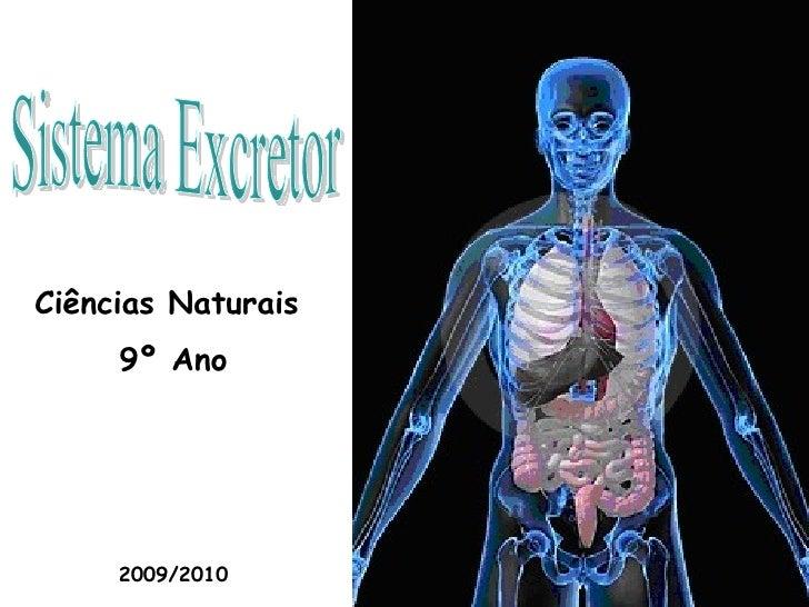 Sistema Excretor Ciências Naturais  9º Ano 2009/2010