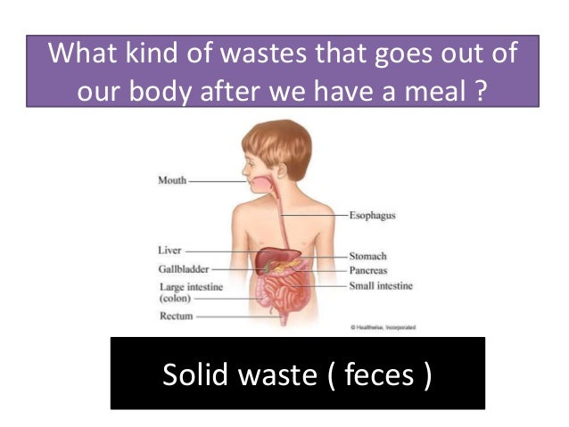 What kind of wastes that goes out of our body after we have a meal ? Solid waste ( feces )