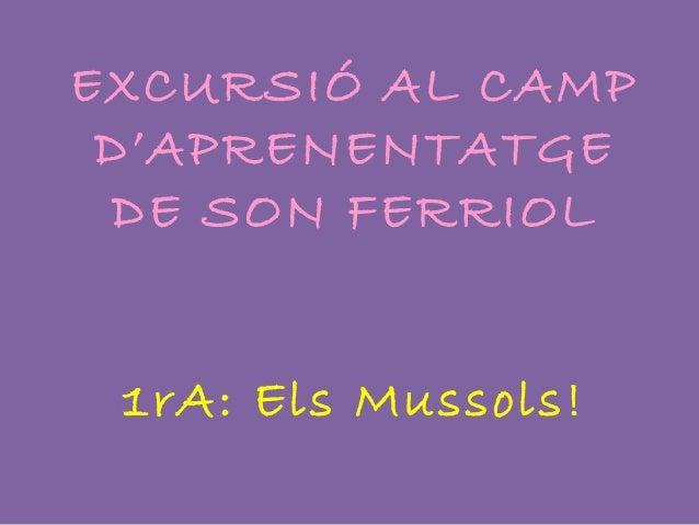 EXCURSIÓ AL CAMPD'APRENENTATGEDE SON FERRIOL1rA: Els Mussols!