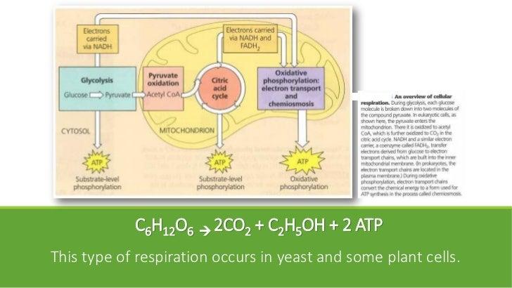Glucose & Sucrose Fermentation: Carbon Dioxide Production