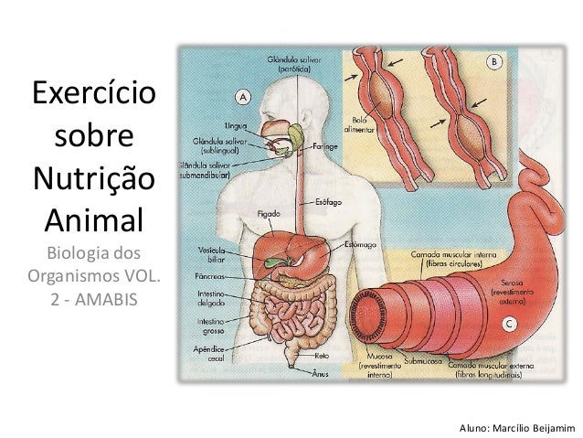 Exercício sobre Nutrição Animal Biologia dos Organismos VOL. 2 - AMABIS Aluno: Marcílio Beijamim