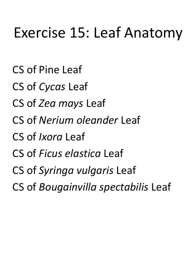 Exercise 15 Leaf Anatomy