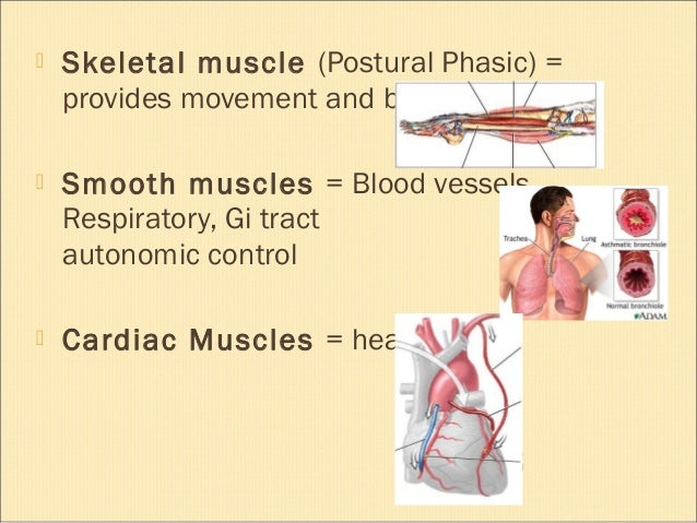 Exercise for muscles and joints Slide 3