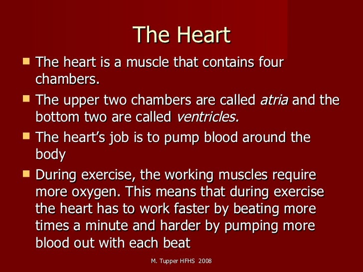 The Heart <ul><li>The heart is a muscle that contains four chambers. </li></ul><ul><li>The upper two chambers are called  ...