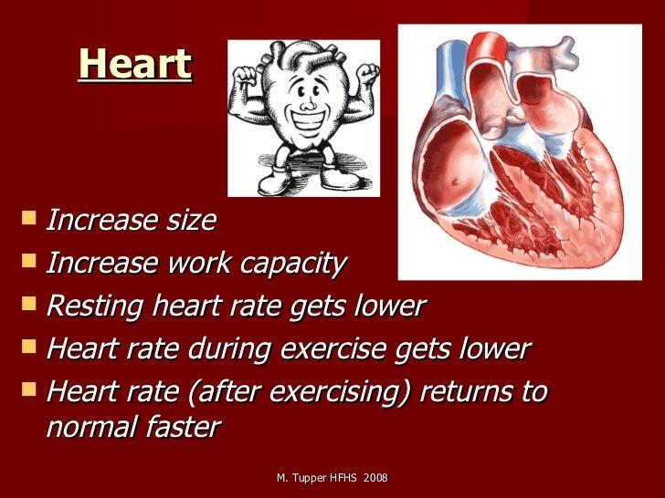 Heart   <ul><li>Increase size </li></ul><ul><li>Increase work capacity </li></ul><ul><li>Resting heart rate gets lower </l...