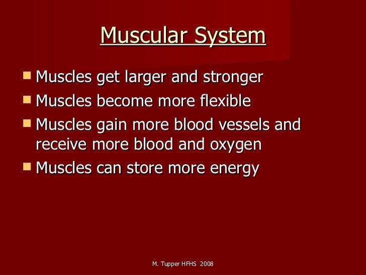 Muscular System <ul><li>Muscles get larger and stronger </li></ul><ul><li>Muscles become more flexible </li></ul><ul><li>M...