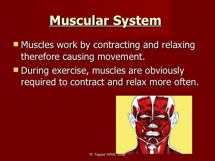 Muscular System   <ul><li>Muscles work by contracting and relaxing therefore causing movement.  </li></ul><ul><li>During e...