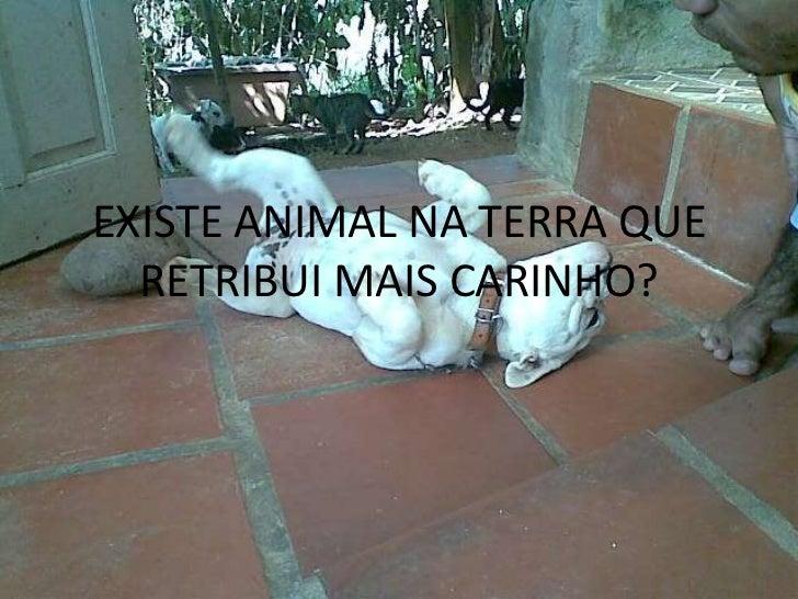 EXISTE ANIMAL NA TERRA QUE  RETRIBUI MAIS CARINHO?