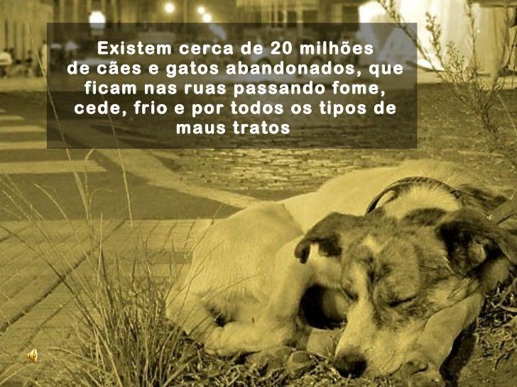 Existem cerca de20 milhões decães e gatos abandonados, que ficam nas ruas passando fome, cede, frio e por todos os tipos...
