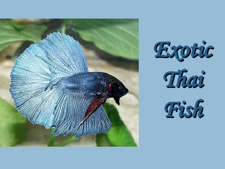 Thai Exotic Fish