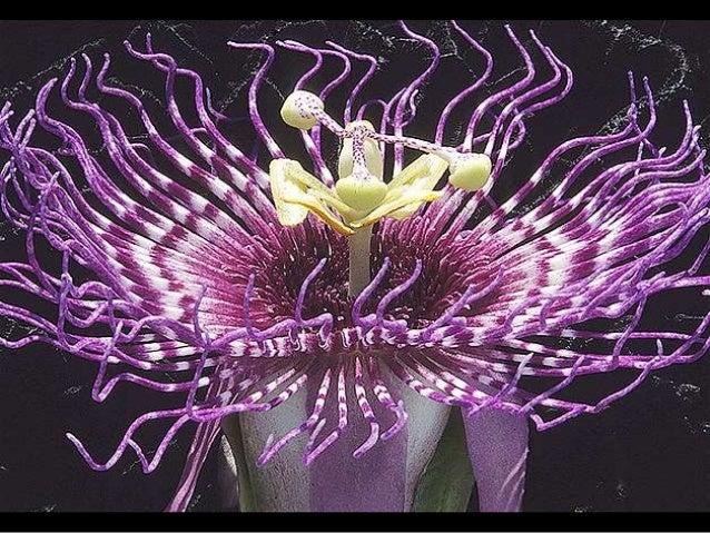 Exotic Flora Slide 2