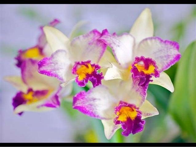 Exotic Flora Slide 3