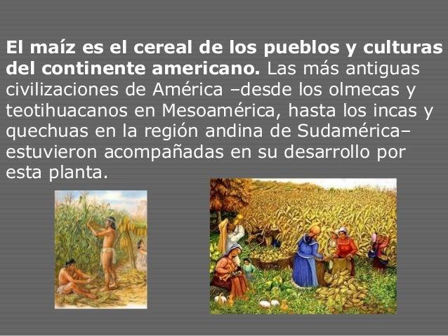 El maíz es el cereal de los pueblos y culturas del continente americano. Las más antiguas civilizaciones de América –desde...