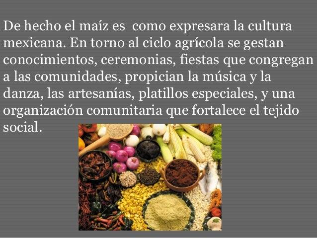 De hecho el maíz es como expresara la cultura mexicana. En torno al ciclo agrícola se gestan conocimientos, ceremonias, fi...