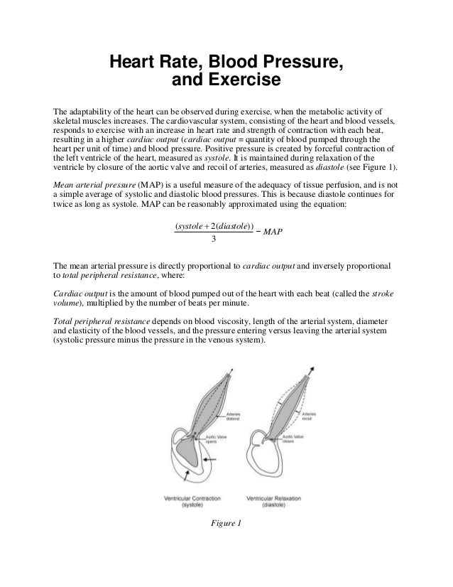 Heart Rate, Blood Pressure,                       and ExerciseThe adaptability of the heart can be observed during exercis...