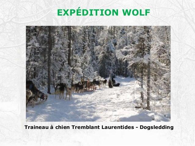 EXPÉDITION WOLF Traineau à chien Tremblant Laurentides - Dogsledding EXPÉDITION WOLF