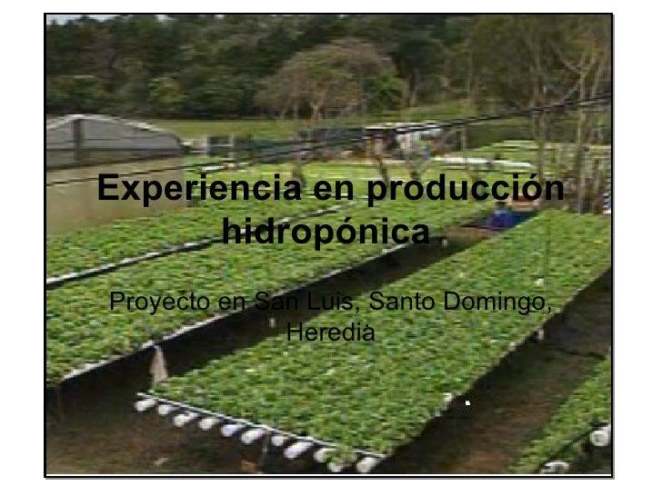 Experiencia en producción       hidropónicaProyecto en San Luis, Santo Domingo,              Heredia