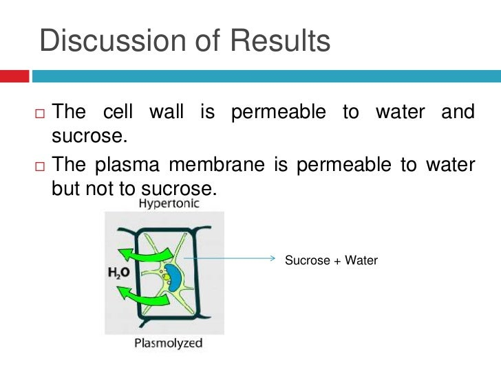 factors affecting cell membrane permeability experiment