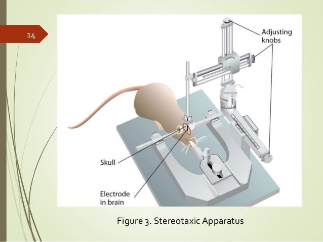 Stereotaxic Device* Stereo Taxic Device - Stereo Taxic Device