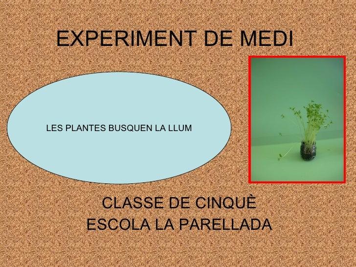 EXPERIMENT DE MEDI CLASSE DE CINQUÈ ESCOLA LA PARELLADA LES PLANTES BUSQUEN LA LLUM