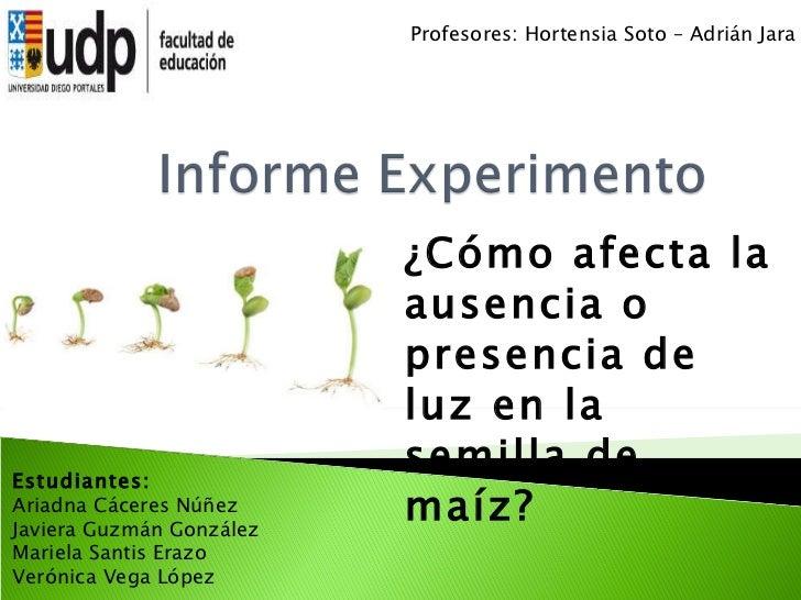 ¿Cómo afecta la ausencia o presencia de luz en la semilla de maíz? Profesores: Hortensia Soto – Adrián Jara Estudiantes: A...