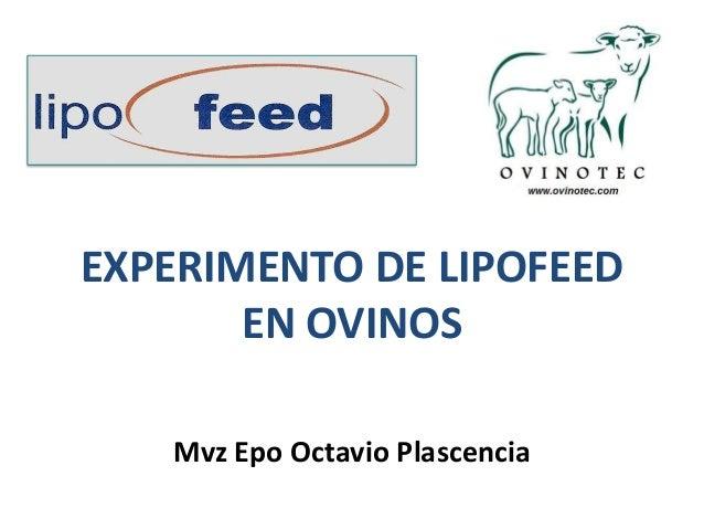 EXPERIMENTO DE LIPOFEED EN OVINOS Mvz Epo Octavio Plascencia