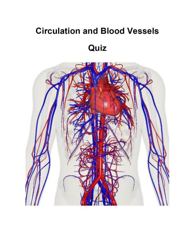 Charmant Anatomy And Physiology Blood Vessels And Circulation Quiz ...