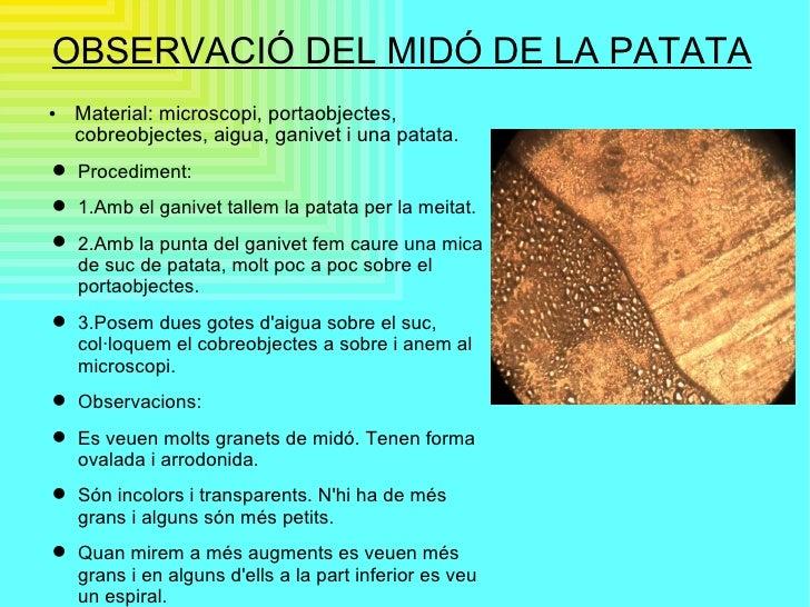 OBSERVACIÓ DEL MIDÓ DE LA PATATA <ul><li>Material: microscopi, portaobjectes, cobreobjectes, aigua, ganivet i una patata. ...
