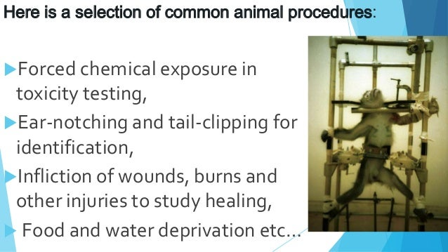 a case study on animal testing Case title: animal experimentation and research: thoughts and facts description: this is not a case per se but more of an overview of the fundamentals and practices of animal experimentation research.