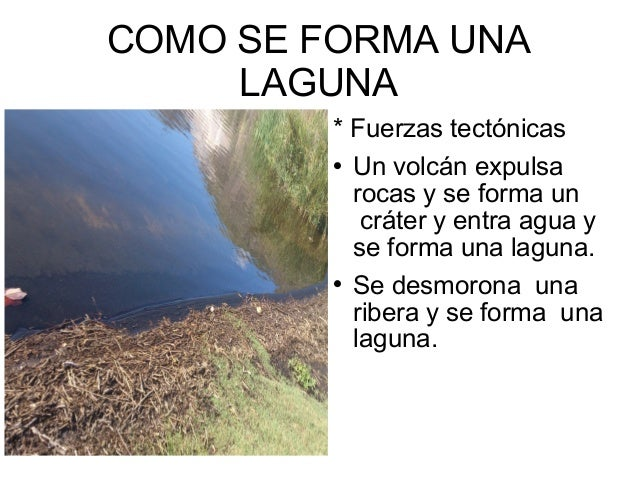 Experto la laguna for Como construir una laguna artificial