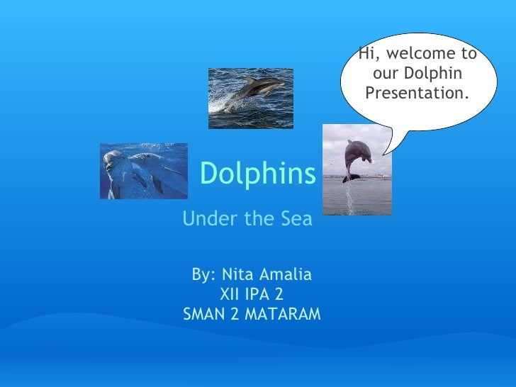Dolphins  Under theSea    By: Nita Amalia XII IPA 2 SMAN 2 MATARAM Hi, welcome to our Dolphin Presentation.