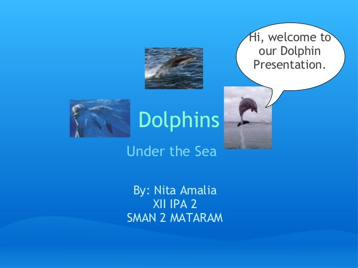 Hi, welcome to                    our Dolphin                   Presentation. Dolphins        Under the Sea               ...