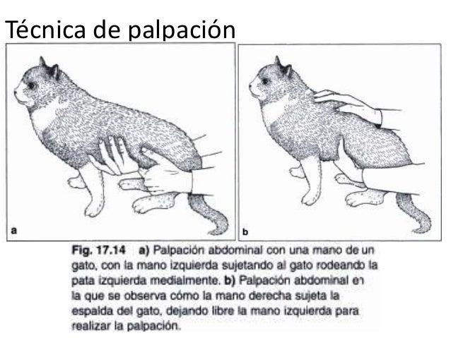 Exploración del aparato digestivo en perros y gatos copia
