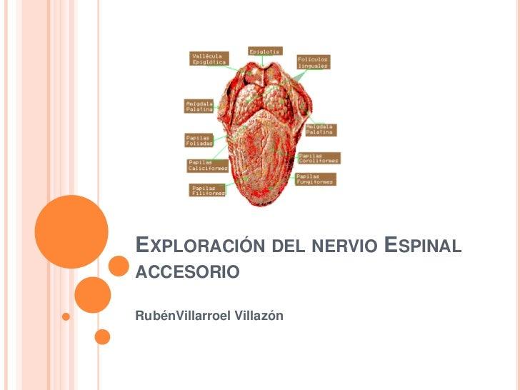 EXPLORACIÓN DEL NERVIO ESPINALACCESORIORubénVillarroel Villazón
