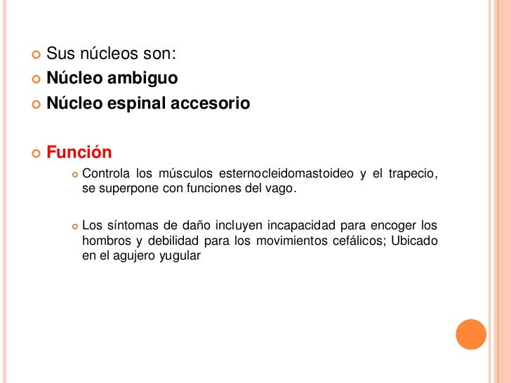  Sus núcleos son: Núcleo ambiguo Núcleo espinal accesorio   Función         Controla los músculos esternocleidomastoi...