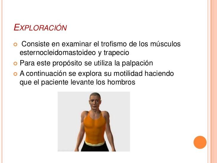EXPLORACIÓN Consiste en examinar el trofismo de los músculos  esternocleidomastoideo y trapecio Para este propósito se u...