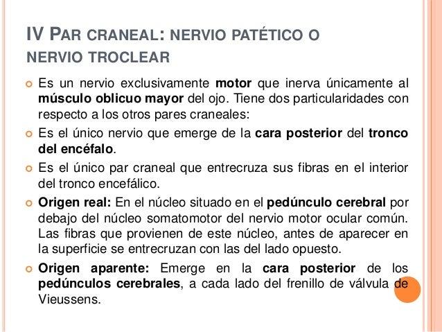 Exploraci n de los pares craneales for Cuarto par craneal